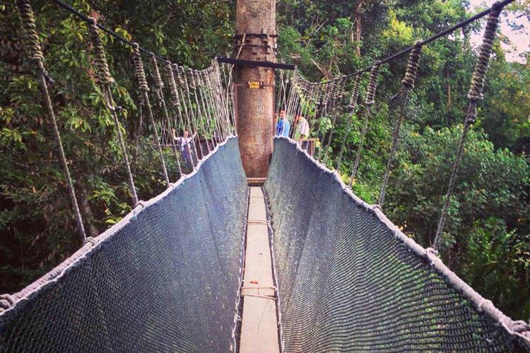 沙巴神山一日游(植物园 奶牛牧场 波令温泉 树顶吊桥)