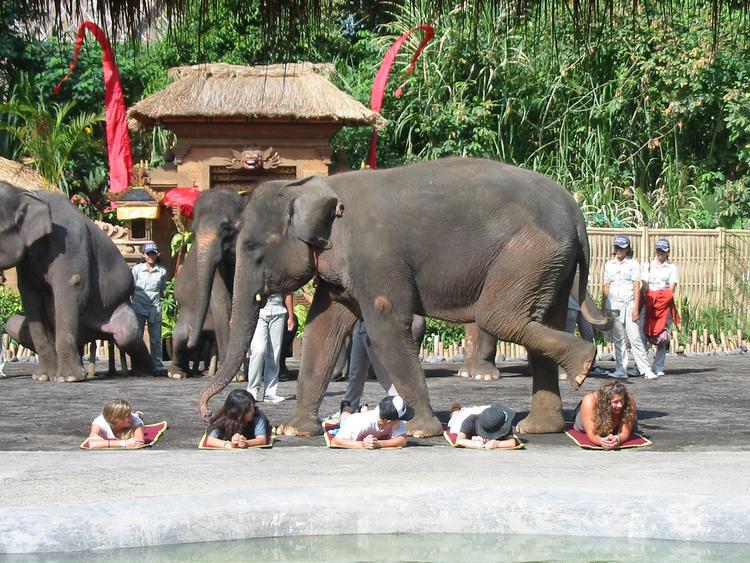 巴厘岛野生动物园——大象表演:你敢上场试试吗?