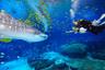 【亲子营】【魅力东澳】东澳岛 珠海长隆海洋王国 市区观光4日游