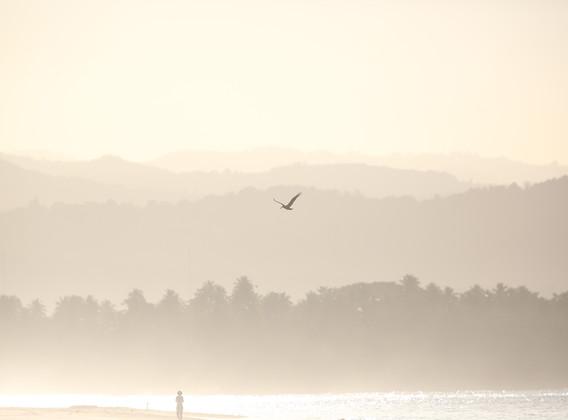 """自然大师系列-""""伟大的迁徙""""观鸟1日游【北京/亲子游/周边游】"""