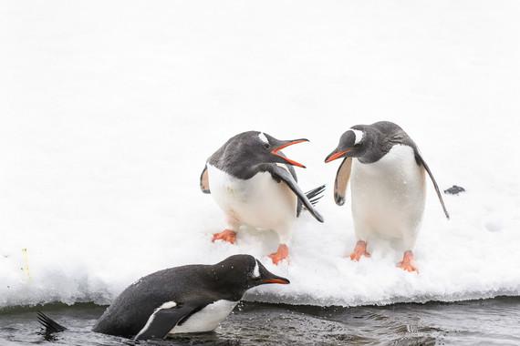 极地-【探索南极,华人包船】阿根廷+乌拉圭+南极 宏迪斯号17日游【企鹅、南极半岛、专业探险队、南极科考站】