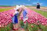 """【花季盛宴/郁金香】荷兰一地10天跟团游【""""欧洲享有盛名的春季花园""""— 库肯霍夫郁金香公园/荷兰签】"""