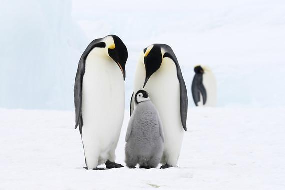 【南极不难及】阿根廷+经典南极半岛深度游16日16日游【世界豪华探索号带你独览地球最远大陆,让你的探险梦不再遥远】