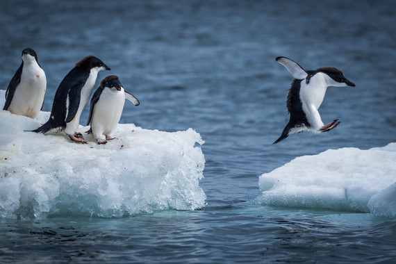 企鹅铲屎官1日游