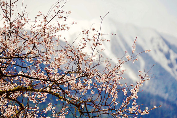 【遨游摄影】波密桃花私享摄影之旅7日游【拍摄题材丰富/资深摄影师带队/现场指导分享/专业极致行程】