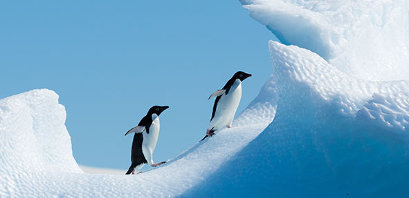 南极&智利 极地新年曙光