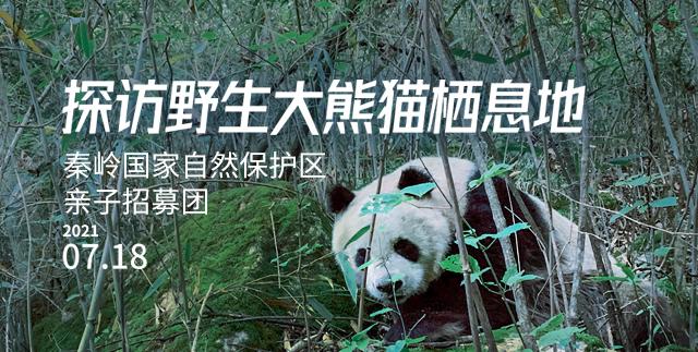 20210602探访野生大熊猫栖息地